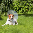 Stock Photo: Canine patient 2
