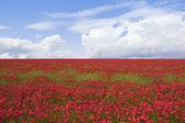 Poppy field 2 — Stock Photo