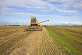 Old yellow harvester — Stock Photo