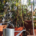 Garden still life — Stock Photo