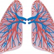 Lungs of the person — Stock Vector