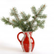 Bouquet with spruce branches in burgundy ceramic vase on a white background - Stock Photo