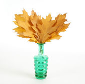 Autumn bouquet of oak leaves in a vase with colored glass on a white backgr — Stock Photo