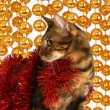 Bengal cat on the background of Christmas decorations — Stock fotografie