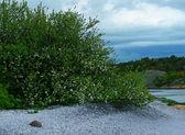 Strand van witte schelpen — Stockfoto