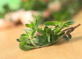 Marjoram Twig — Stock Photo