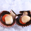 Raw Queen Scallops on Ice — Stock Photo