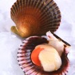 Royalty-Free Stock Photo: Raw Queen Scallop with a Colorful Scallop Shell on Ice