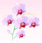 Orchids and butterflies — Stock Vector