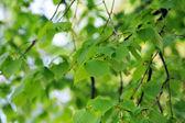 Deciduous tree — Stock Photo