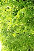 Arbre à feuilles caduques — Photo