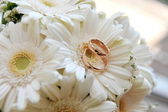 White gerbera and wedding rings — Stock Photo