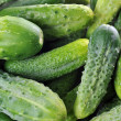 Green cucumbers. — Stock Photo