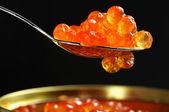 Lachs kaviar close-up — Stockfoto