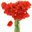 Bouquet of poppies — Stock Photo