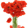 Stock Photo: Bouquet of poppies