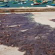 Drying fishing net in the fishing village Marsaxlokk, Malta — Stock Photo #5706895