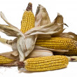 Maize ears isolated over white. — Stock Photo