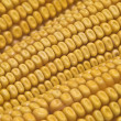 Closeup from maize ears. — Stock Photo