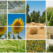Stock Photo: Agriculture and ecology.