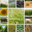 Stock Photo: Agriculture and animal husbandry.