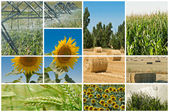 Agriculture and ecology. — Stock Photo