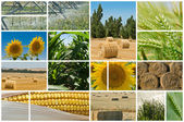 Agriculture. — Stock Photo