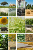 Agriculture and animal husbandry. — Stock Photo