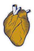 Human heart icon — Stock Vector