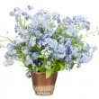 Stock Photo: Bouquet from Forget-me-nots (Myosotis)