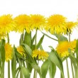 Stock Photo: Real spring flowers border