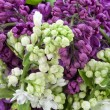 Background from a white and purple lilac — Stock Photo