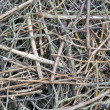 Background from set of thin dry branches — Stock Photo