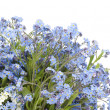 Stock Photo: Forget-me-nots (Myosotis) plant postcard