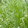 Pepperwort-salad background — Stock Photo #6367523