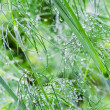 Stock Photo: Drops and fennel background