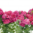 Stock Photo: Pink roses border collage