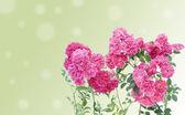 Cartolina di rami di rose rosa — Foto Stock