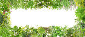 Green banner from plants — Stock Photo