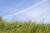 Grass against on sky — Stock Photo