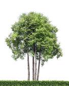 Izole ağaçlar ve çit — Stok fotoğraf