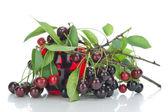 Black cherries branches — Stock Photo