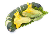 Vegetable marrow is cut on segments — Stock Photo