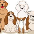 Cute dog collection - 