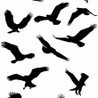 Eagle silhouette collection - Stock Vector