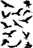 Eagle silhouette collection — Stock Vector