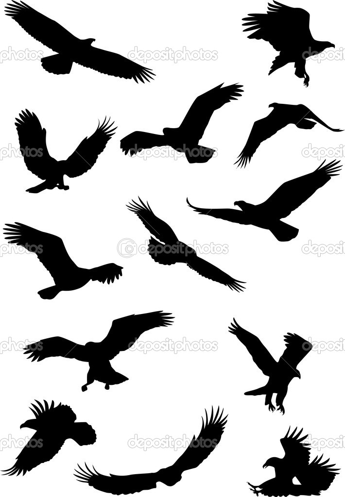 Eagle silhouette collection — Stock Vector © dagadu #5490090 Eagle Silhouette Vector