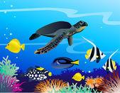 Sea life cartoon — Stock Vector