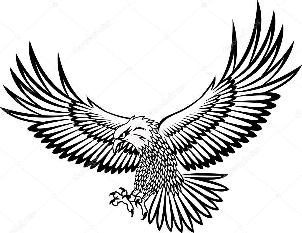 Eagle vector   Vector by