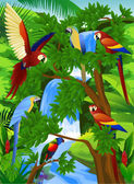 Parrot bird in the forest — Stock Vector